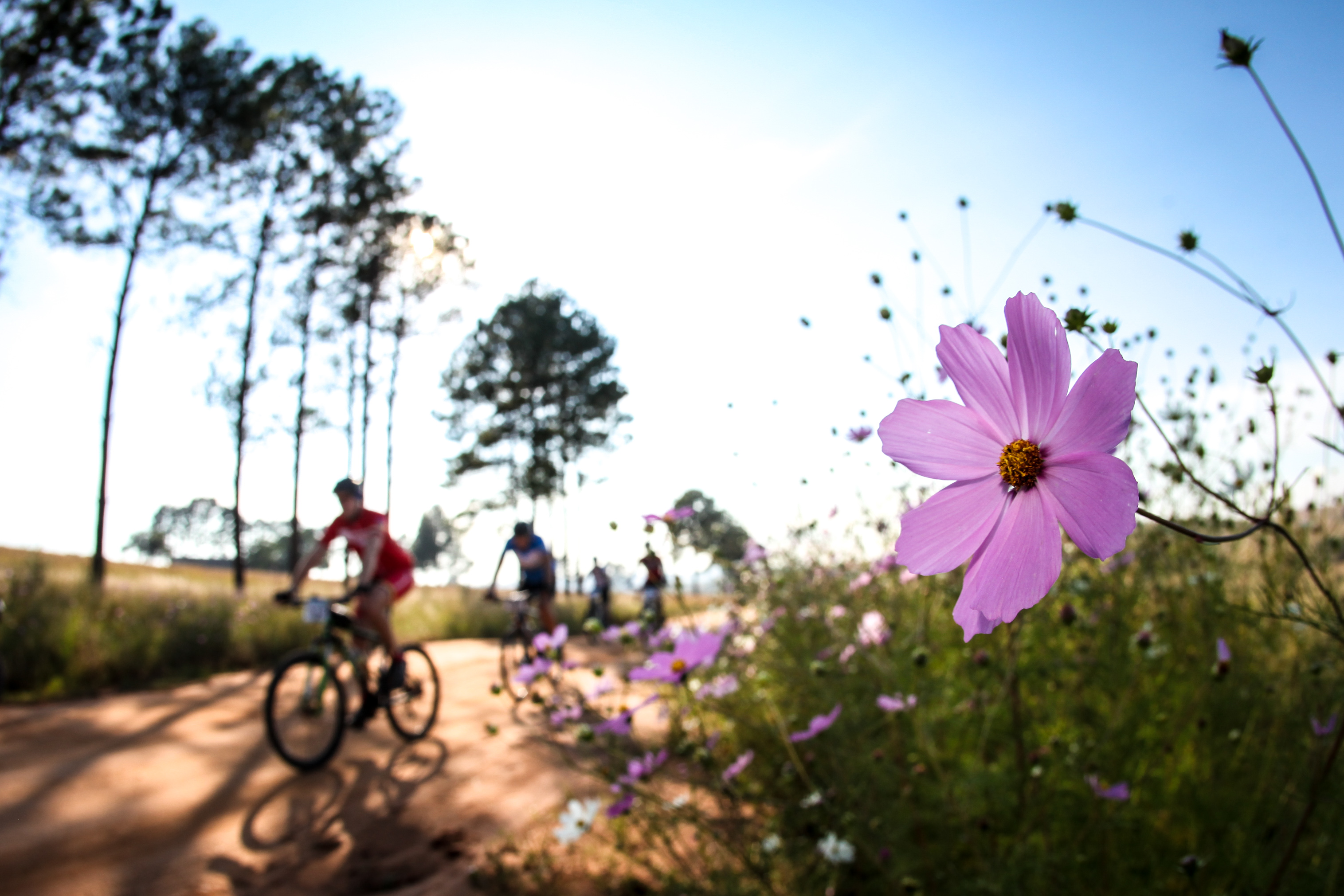 RIDERS GEAR UP FOR GAUTENG'S PREMIER STAGE RACE